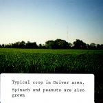 Farm in Driver